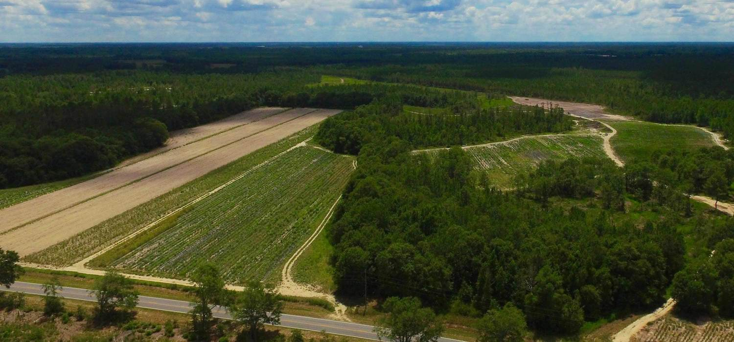 Farm Land for Sale - Agricultural properties for sale in Georgia