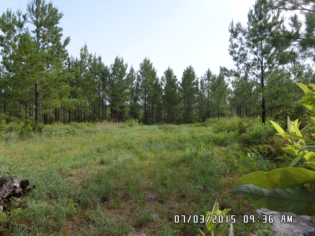 Land Spotlight: 103 Acres, Hunting, Timber, and Camping! - article image