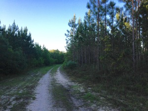 Weekly Spotlight. 274 Acres with Timber, Seclusion, & Wildlife - article image