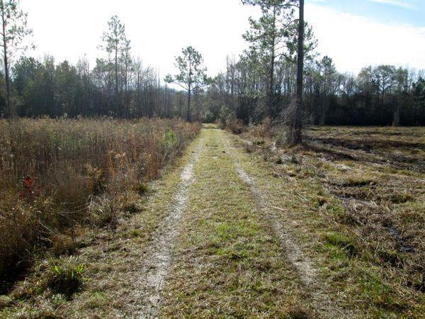 """Spotlight on """"54 Acres Trudie Rd"""" - article image"""