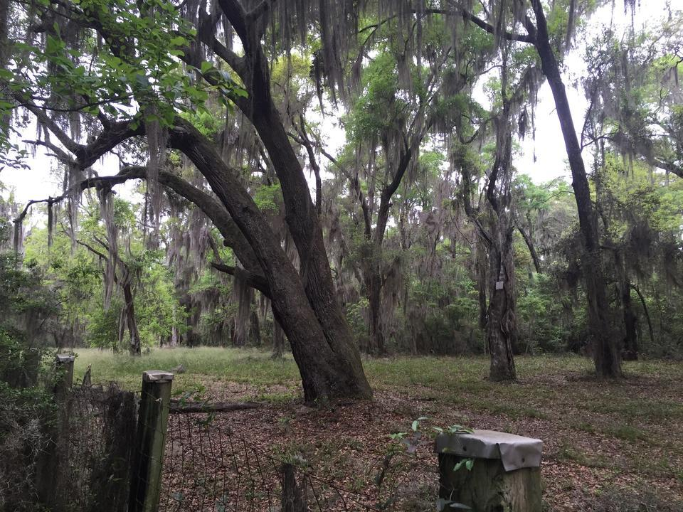 Land Available Near Musgrove Plantation is Rare Opportunity - article image