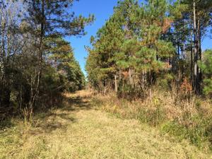 Ideal Land Investment for Recreational Enthusiast - article image