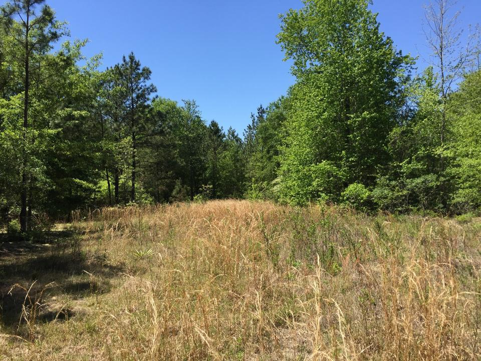 Versatile Land For Sale in Wheeler County - article image