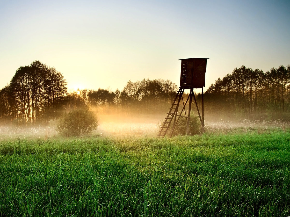 Let the Hunt Begin! How Owning Your Own Land Can Improve Opening Day - article image
