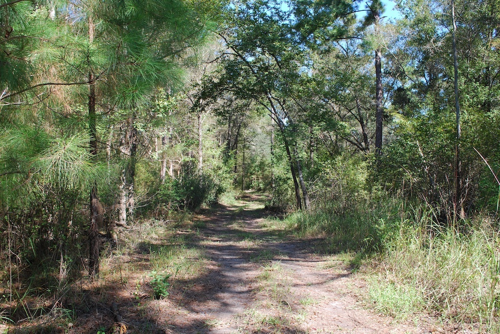 108 Acres with a River and Natural Forest Create Perfect Environment for Camping - article image