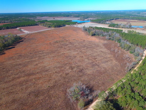 136 Acres Available in Alma, GA - article image