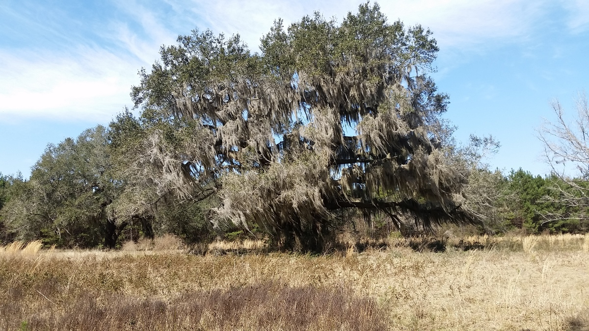 Acreage Close to Golden Isles Offers Solitude and Access to Coastal Community - article image