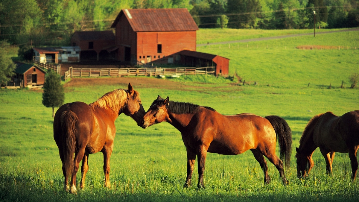 Build a Haven For Your Horses With This Pastureland - article image
