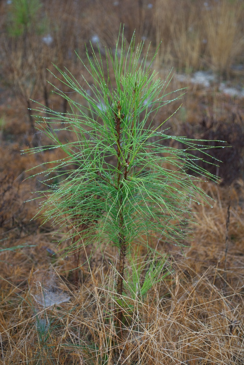 Replanting Our Trees Breathes Life Into Our Environment - article image