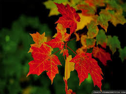 Leaves of Green and Other Brilliant Colors - article image