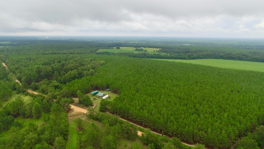 This Tract Offers Scenic Views, Merchantable Timber and Ashburn, GA - article image