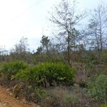 3 Acre Tracts in Brantley County thumbnail image