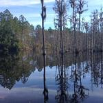 Gorgeous Cypress Pond on 25 Acres thumbnail image