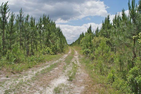 225 Acres Highway 110 main image