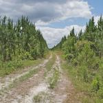 225 Acres Highway 110 thumbnail image