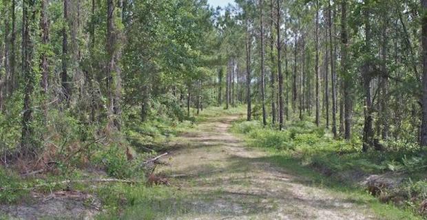 253 Acres Brantley County image