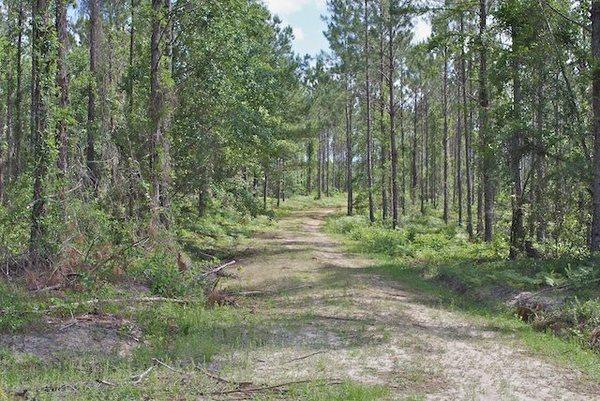 253 Acres Brantley County main image