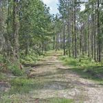 253 Acres Brantley County thumbnail image