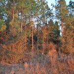 Hodge Place Rd Tract thumbnail image