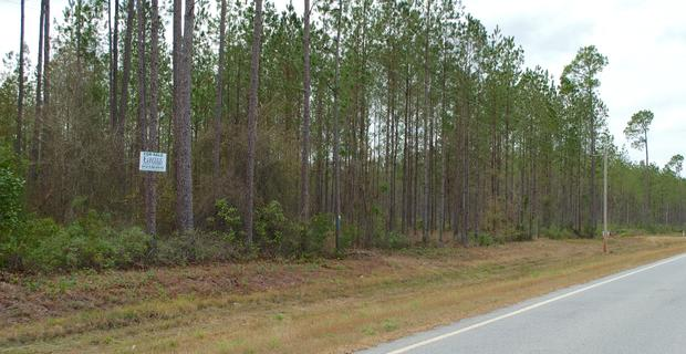 Tract 4 - Small Acreage in Clinch County image