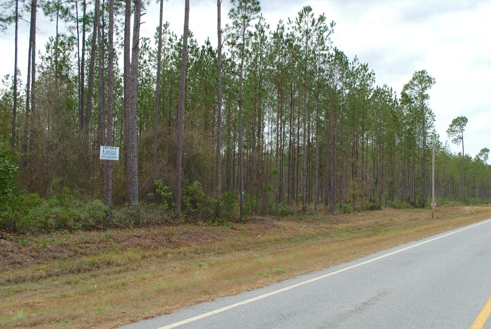 Tract 4 - Small Acreage in Clinch County main image