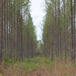 Tract 3 - Small Acreage in Clinch County thumbnail image