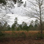 169 Acres Ideal for Hunting and Recreation! thumbnail image