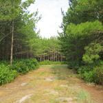 21 Acres Millwood Plantation thumbnail image