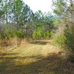 54 Acres Hunting Paradise on Trudie Road thumbnail image