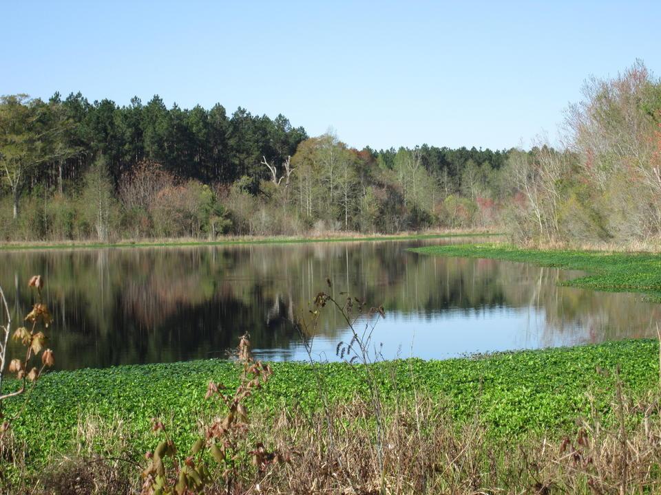 250 Acres with Gorgeous Pond & Abundant Wildlife image