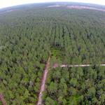 432 Acres Beautiful Timberland and Great Hunting thumbnail image