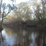 Alapaha River Tract - 822 Acres with River Front and Timberland thumbnail image