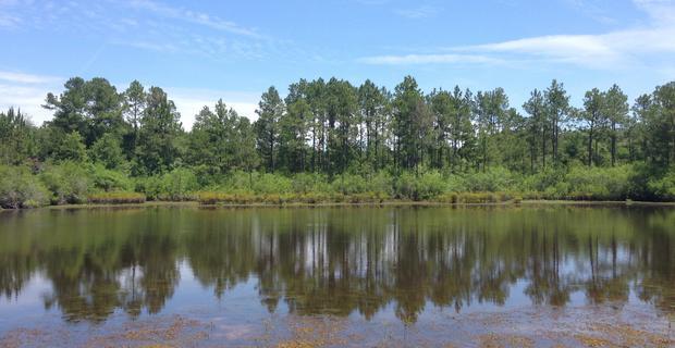 958 Acres - $550 Per Acre - Suwannoochee Creek Plantation  image