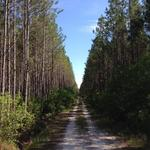 1528 Acres Timberland, Recreational and Investment Tract thumbnail image