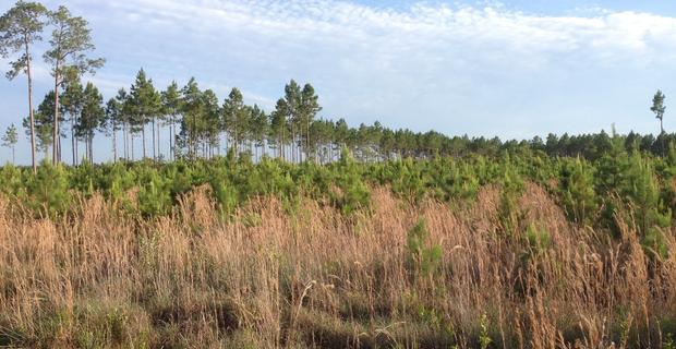 518 Acres Bickley Rd Timber Plantation image