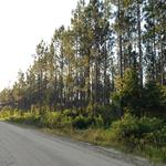 295 Acres on Camp Branch Road -Timberland & Recreational Tract  thumbnail image