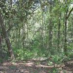 McIntosh Creek Bluff Homesite 11 thumbnail image