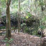 McIntosh Creek Bluff Tract 10  thumbnail image