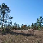 Nice 20 Acre Tract in Quiet Country Setting thumbnail image
