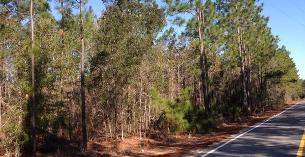 Nice 11 Acre Wooded Homesite  image