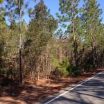 Nice 11 Acre Wooded Homesite  thumbnail image