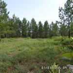 Hunting, Timber, and Camping! 103 Acres thumbnail image