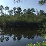 936 Acre Timber Investment and River Forest thumbnail image