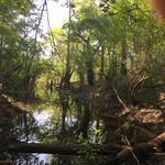 287 Acre Satilla River Camp thumbnail image