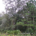 Multi-use 13 Acre Tract in Screven GA thumbnail image