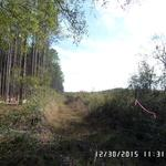 25 acres on Owens Road thumbnail image