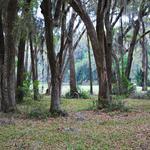 Sutherland Bluff Plantation Lots thumbnail image