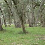 Sutherland Bluff Plantation # 12 thumbnail image