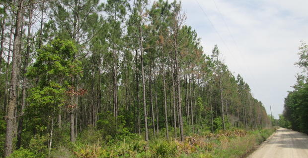 47.22 Acre Investment Tract image