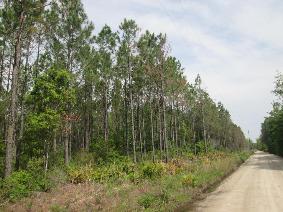 47.22 Acre Investment Tract main image